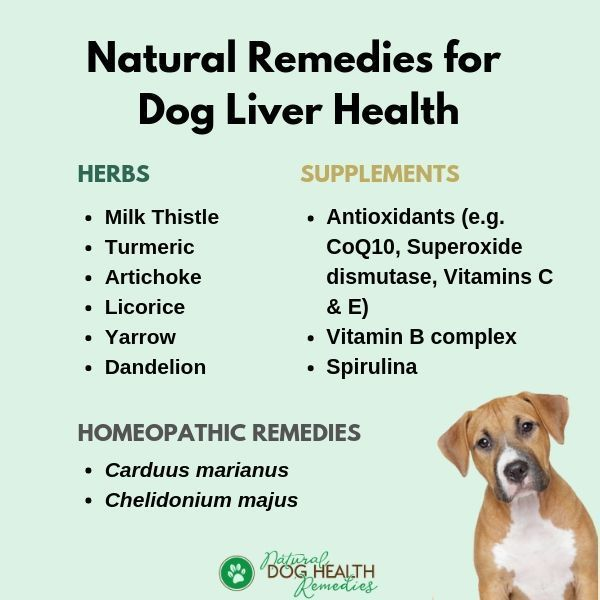 Use these natural remedies to support liver health in dogs.   Liver health,  Dogs health remedies, Natural dog remedies