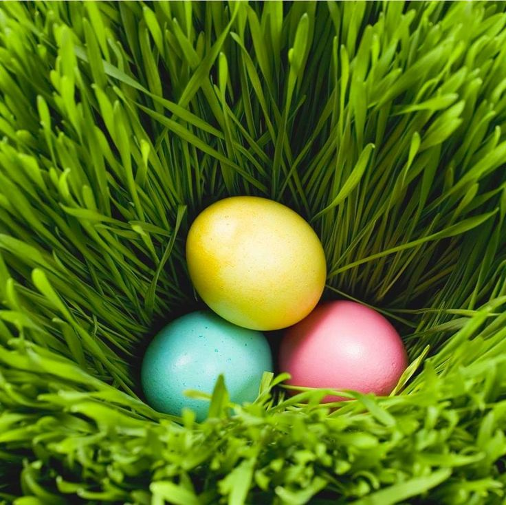 34 best the easter eggs perts images on pinterest easter eggs we cant wait for the longue vue house and gardens easter egg hunt tomorrow voltagebd Images