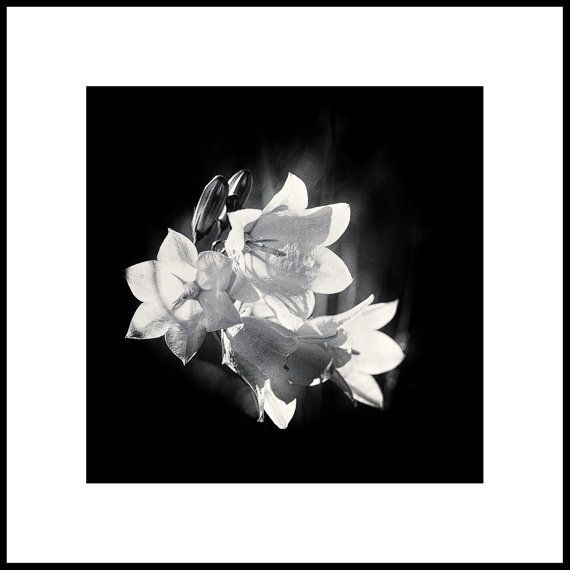 Black and White Macro Photography  by CrionnaPhotography on Etsy