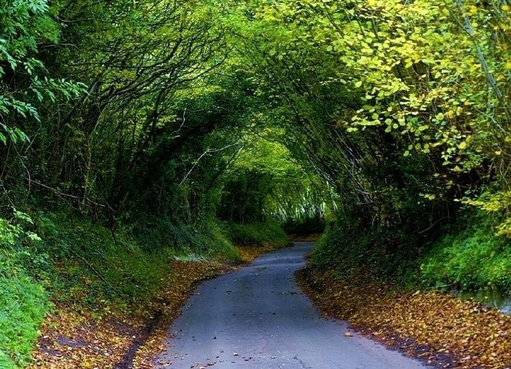 green alley in spring