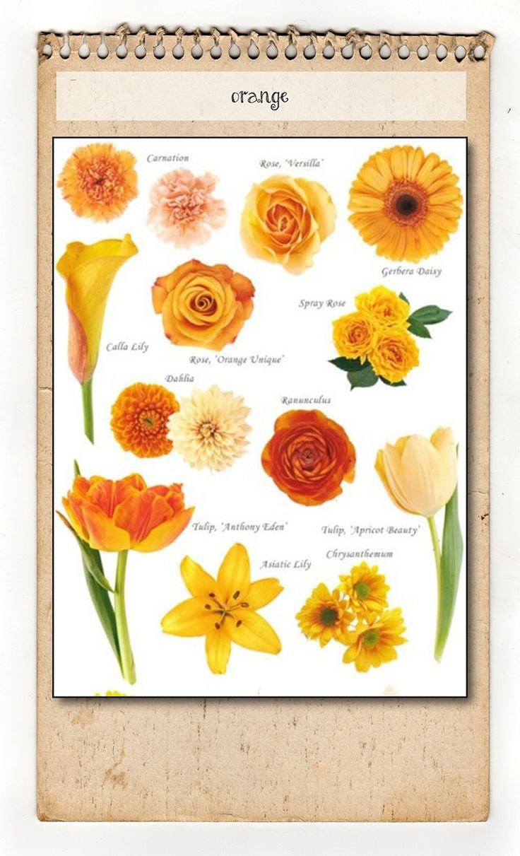 Wedding flower color guide a bunch of flowers decorator s images about flower names colors on geenschuldenfo Gallery