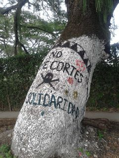 Cartago, Regalías Sin Raíces #TalaDeÁrboles #CambioClimático