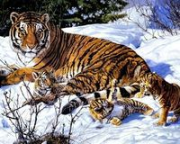 Russian Government: Link up all existing Siberian Tiger Habitat and protect it.
