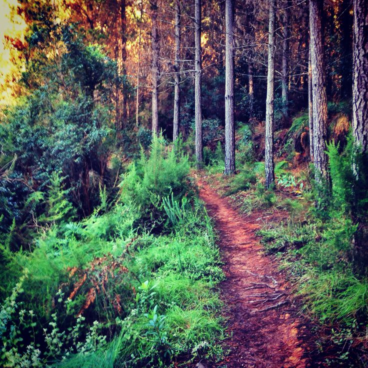 My home trail. George, Western Cape. Home is where the heart is.