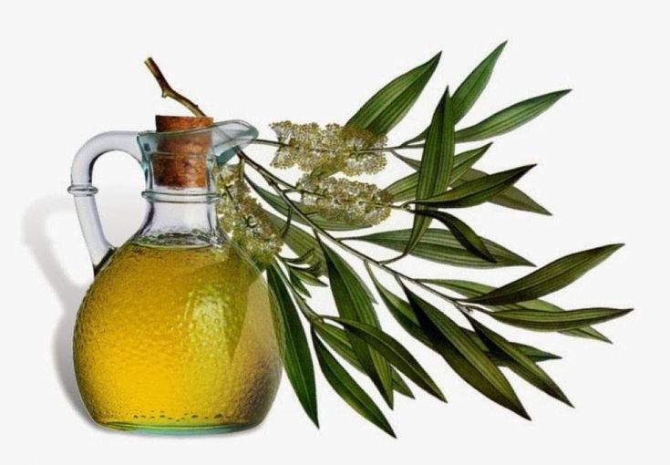 Want a natural solution for toenail fungus? Use Tea Tree or Thyme essential oil - both of which have been scientifically proven to be effective in destroying Candida albicans, the yeast that's often responsible for nail fungus. Mix either oil with an equal amount of Coconut oil - also known for its anti-fungal properties - and paint onto the nails. Also try foot baths twice a day with 10 drops of your preferred essential, Soak for 15-20 mins, then dry the feet thoroughly and apply the nail…