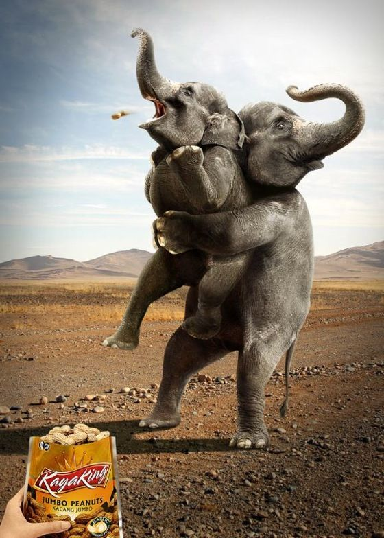 30 great print ads that tell a visual story – Part 1Print Ads, Real Life, Jumbo Peanut, Elephant, Funny Commercials, Design, Funny Advertising, Prints Ads, Animal