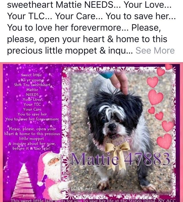 Mattie Pulled By Anarchy Animal Rescue 12 2018 Needs Help