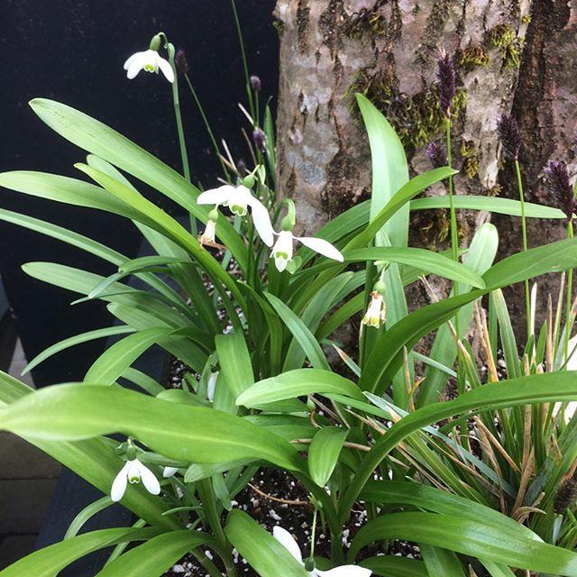 Van Duden gardens with our girl spring flowers Garden