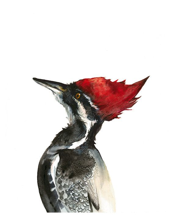 pileated woodpecke art, woodpecker art, bird art- 11 x 14 large print, red, black and white, nature, rustic, bird art via Etsy