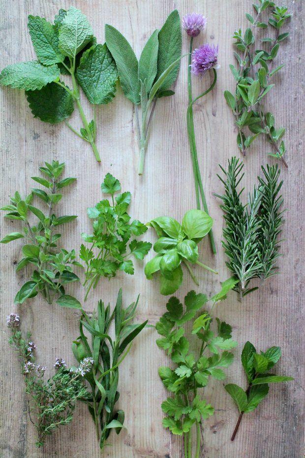 L'articolo Le migliori erbe aromatiche da utilizzare in cucina proviene da Ricette della Nonna. Differenze tra erbe aromatiche fresche ed essiccate Se fino ad ora avete sempre utilizzato le erbe aroma