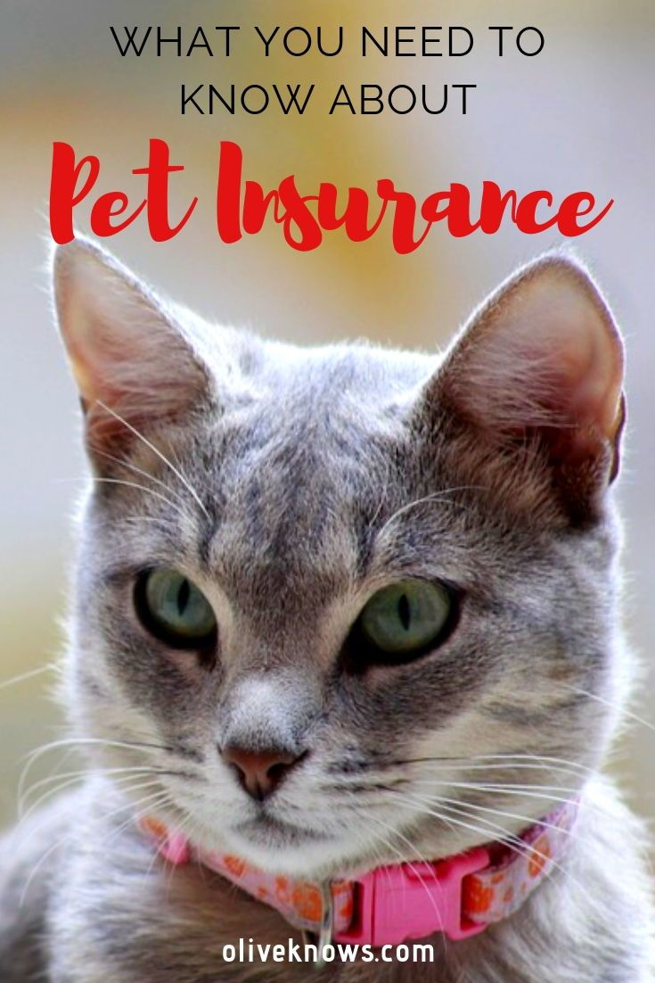What You Need To Know About Pet Insurance Pet Insurance Pet
