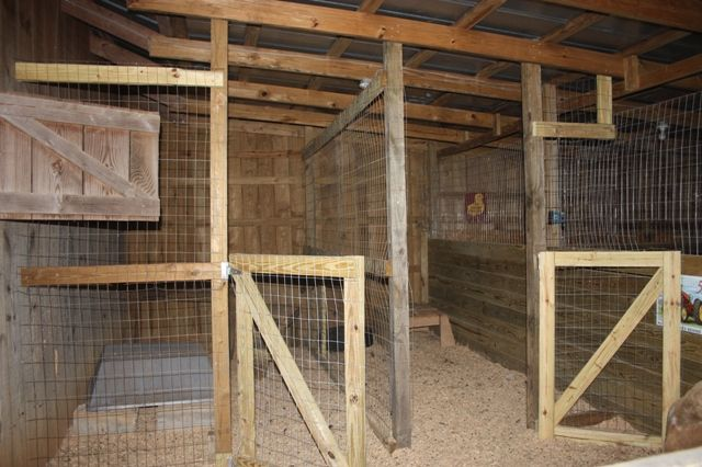 barn+stall+goat | Watch our goats!