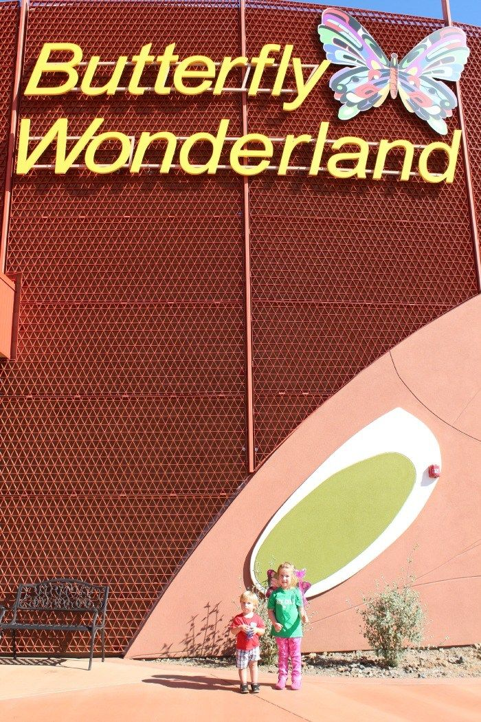 Looking for a fun family adventure in Scottsdale? We went to Butterfly Wonderland Scottsdale and had a blast!
