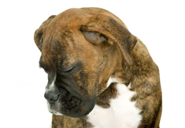 Know the warning signs of cancer in dogs. Understanding the signs of cancer can help you save your dog's life.