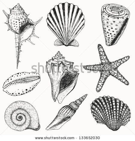 seashells doodle | ... seashells and starfish for you design and scrapbooking | Hqstockphotos