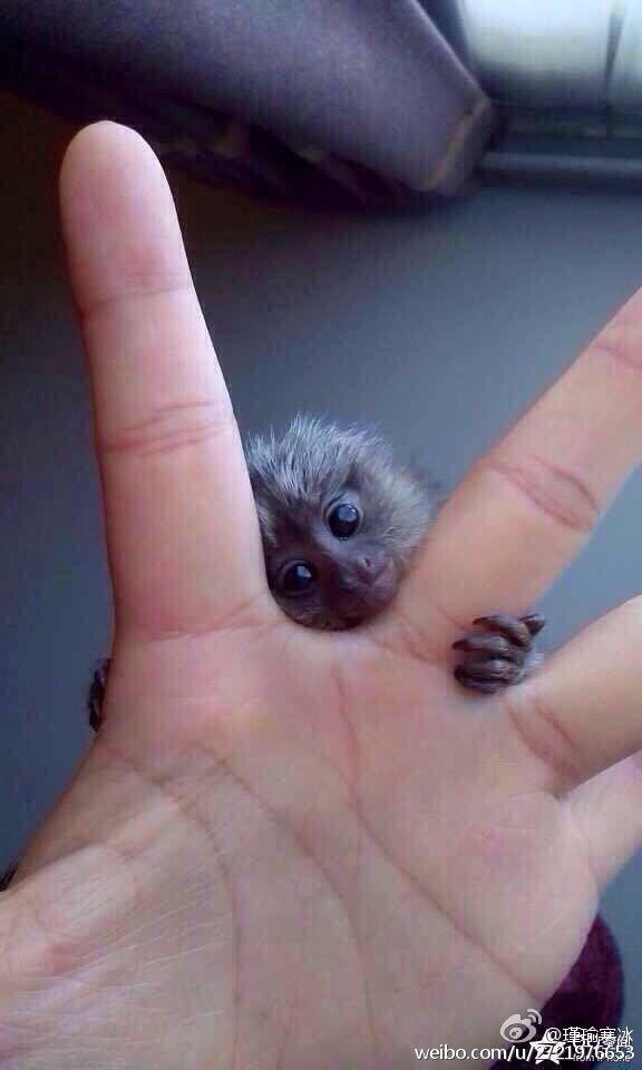 illegal thumb monkey #kawaii