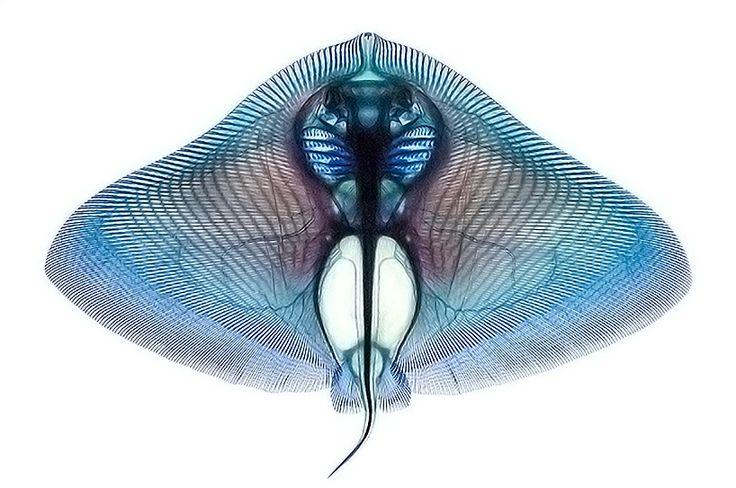 The Beautiful Fish