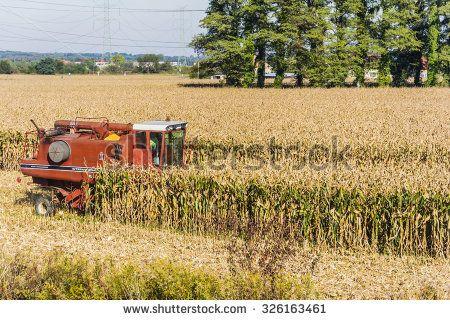 Biskupice Radlowskie, Poland - October 2, 2015: Red combine harvester during harvesting corn (maize)