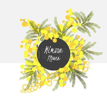 mimosa: Floral retro vintage background, vector illustration, mimosa Illustration