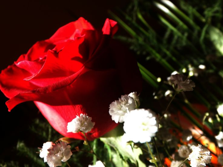 #rose #red #flower #happy #love