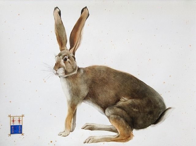 Scott Kelley . Northern Cottontail Rabbit . Watercolor, gouache and graphite on paper