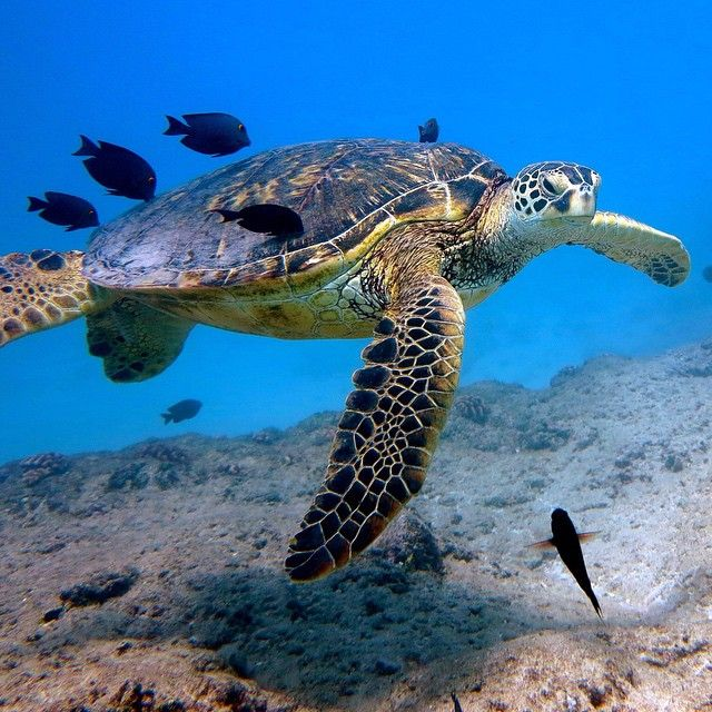 Happy Turtle Thursday!