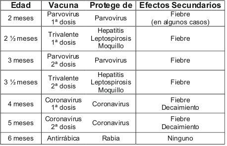 calendario-vacunacion-labrador-retriever.jpg 458×294 pixels