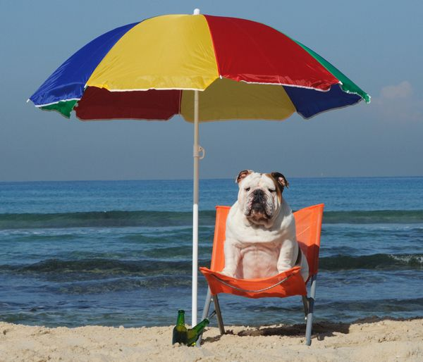 Summer's here and the (bulldog) livin' is easy!