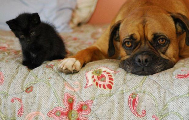 Σας σκέφτονται οι γάτες και οι σκύλοι σας όταν κοιμούνται; - CatWay.gr