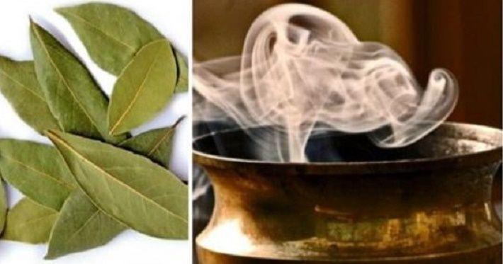 Está curioso(a) para saber por que motivo deve-se queimar e cheirar a fumaça das folhas de louro?Esta é uma velha receita.Mas, antes de saber por que ela deve ser feita, vale a pena saber um pouco sobre o louro, não é mesmo?
