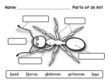 label an insect ant diagram an ants and the five. Black Bedroom Furniture Sets. Home Design Ideas
