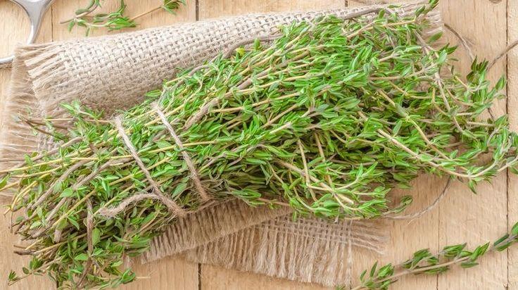 A kakukkfű több mint egyszerű fűszernövény