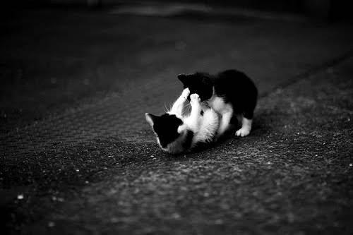 : Kittens Plays, Kitty Cat, Black And White, Catfight, Black White, Baby Animal, Cat Fight, Street Fighter, White Cat