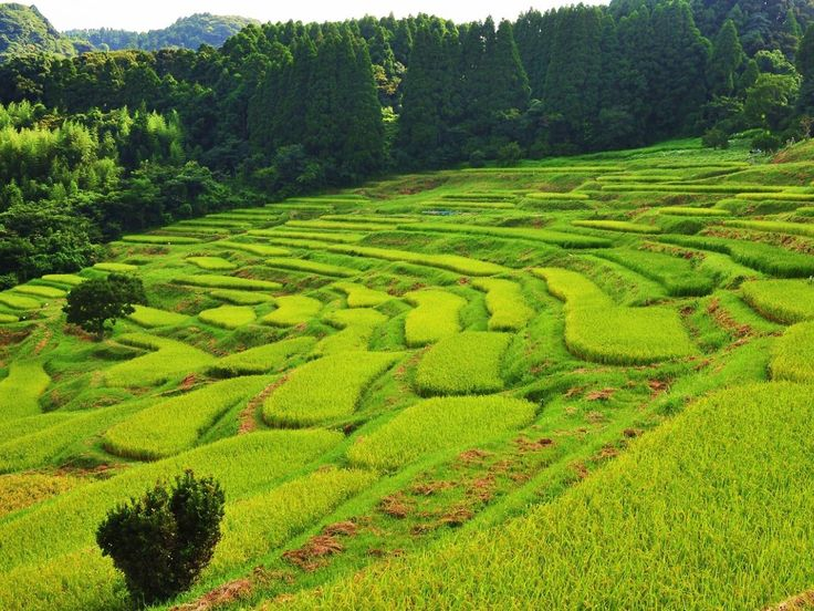 Watch the sun set over terraced rice paddies - Time Out Tokyo's best Chiba spots