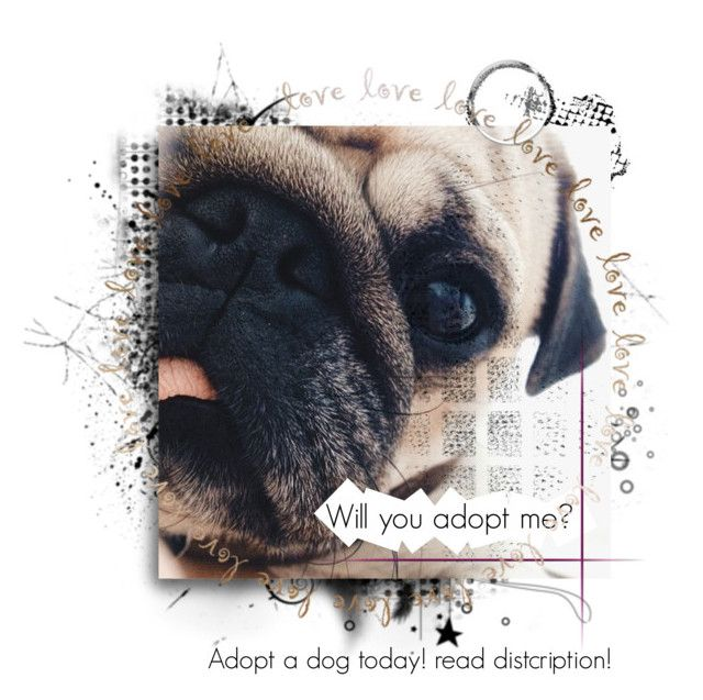 """""""adopt a dog read discription"""" by worldsbiggestdiva ❤ liked on Polyvore"""