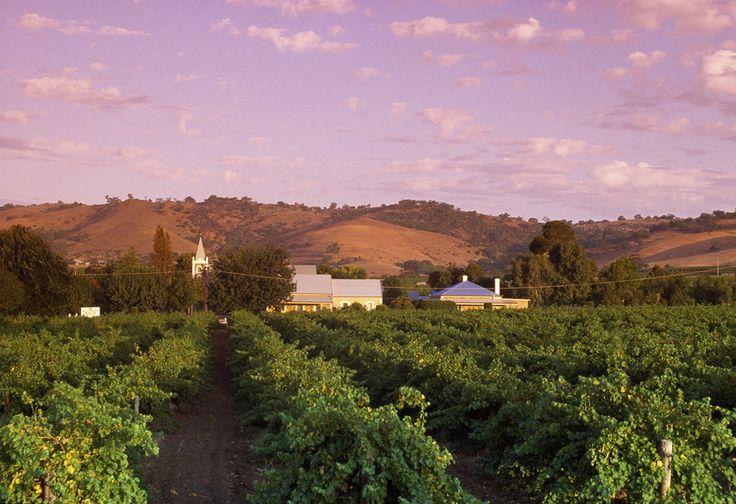The Barossa Valley and Barossa Valley Accommodation For you To Make The Most when you visit South Australia. http://www.ozehols.com.au/blog/south-australia/the-barossa-valley-and-barossa-valley-accommodation-for-you-to-make-the-most/  #BarossaWines #VisitSA #VisitAustralia