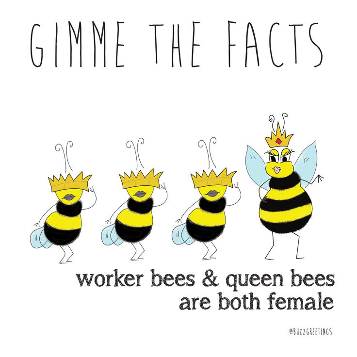 GIMME THE FACTS - Bee Facts. Bees are so important! That's why Buzz Greetings gives $1 to SAVE THE BEES Australia for every purchase made on their Etsy store. buzzgreetings.ets... OR follow bee @Buzz Greetings on Instagram. For more about SAVE THE BEES Australia go to beethecure.com.au  Worker Bees & Queen Bees are both female