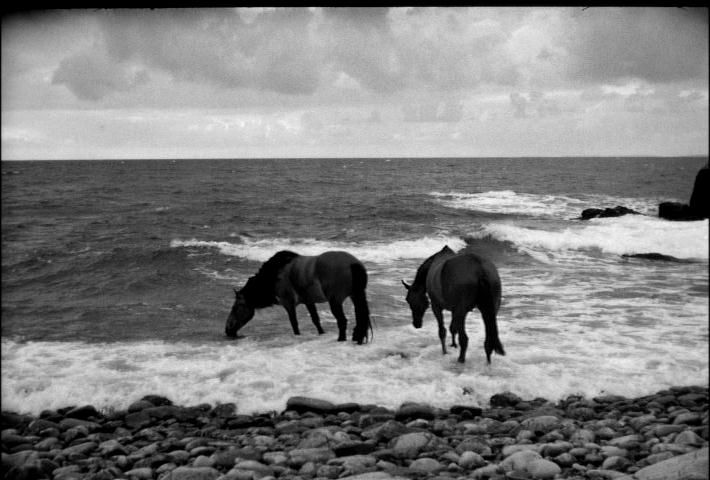 seventh seal, death's horses