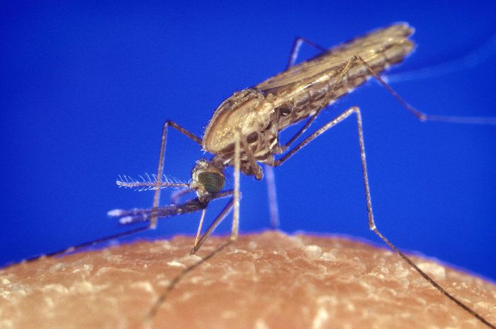 Non-toxic spray stops mosquitoes from reproducing, halts spread of malaria