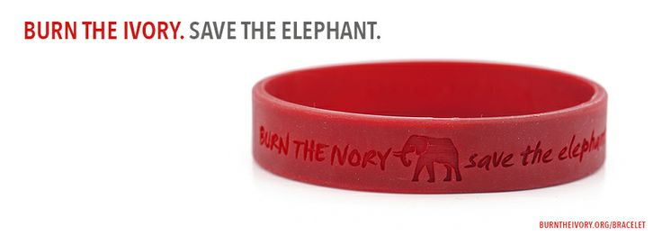 If we want to save the elephant from extinction the ivory trade must end. Join us in spreading the word for elephants and raising funds for anti-poaching efforts: http://burntheivory.org/product/burn-the-ivory-bracelet/