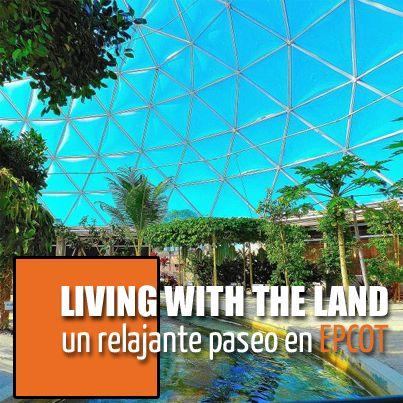 Descubre una de las atracciones más tranquilas, relajantes y educativas de Walt Disney World haciendo click aquí ➨ http://www.disneyadictos.com/2014/01/epcot-y-living-with-land.html