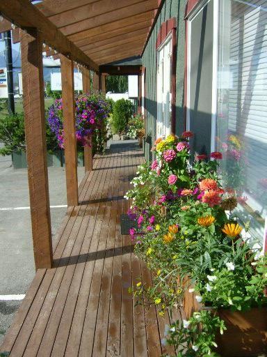 Our flourishing flower boxes loving the warmer weather last summer. Bring it on! #ferniestoke #lovefernie #flowers #summer