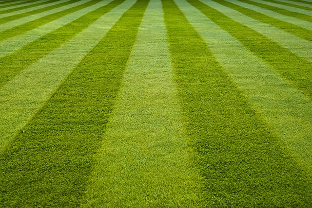 The look of a newly mown lawn, the smell of the cut grass: Lawn Stripes, Blog Posts, Driveways Projects, Beautiful Lawn, Luscious Lawn, Lavish Lawn, Gardens Projects, Mown Lawn, Grass Plants Gardens Insects