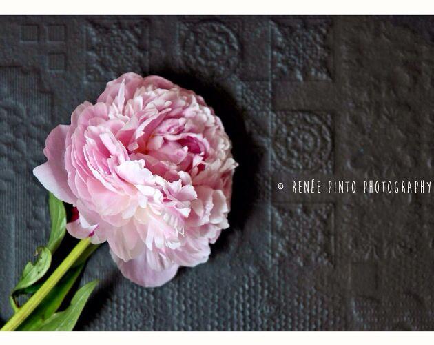 Tiles & Florals x Di Lorenzo Tiles x