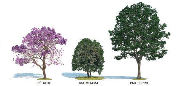 Escolha a melhor árvore para calçada, fachada ou beira de piscina - Casa