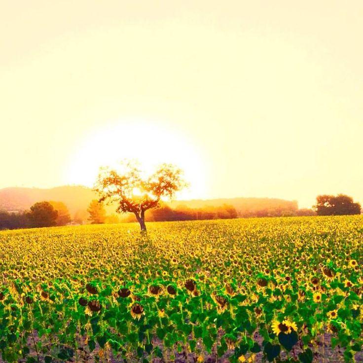 Agosto es un mes seco y caluroso. Las frutas maduran y los días van siendo más cortos. Según las «cabañuelas» puede hacerse la predicción meteorológica del año siguiente basándose en los doce primeros días de agosto. ☀️️ #Alcoy #Alicante #CostaBlanca