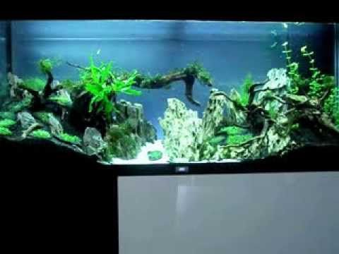 Aquascaping valley Part 1 - YouTube