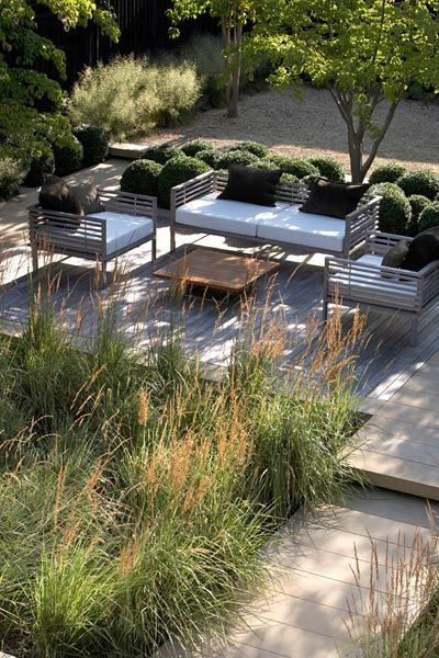 stunning contemporary garden with clipped box and grasses - Annie Pearce of Metamorphosis Design