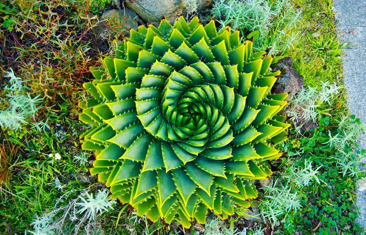 Healing Fractals: Natural Patterns Reduce Stress and Soothe the Mind http://www.corespirit.com/healing-fractals-natural-patterns-reduce-stress-soothe-mind/ &HCATS%
