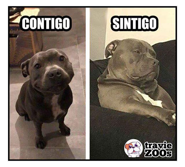 Nada Es Lo Mismo Dogs Pitbull Perros Textrano Missyou Doghousediy Animal Memes Animal Jokes Funny Animals